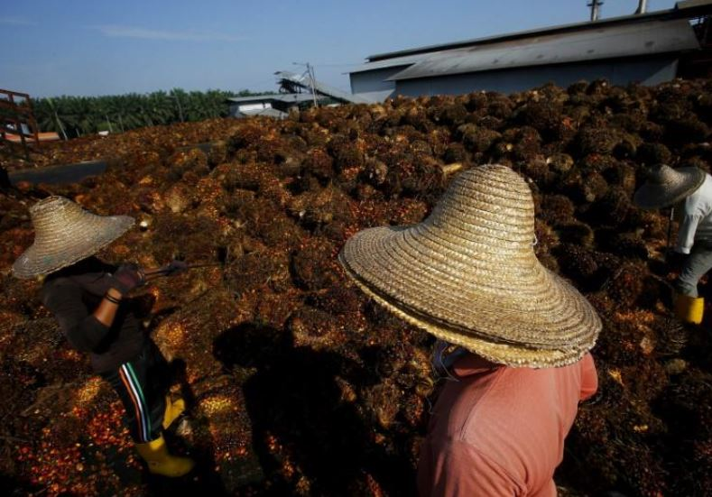 Study in WHO journal compares the similarities of palm oil lobbying to tobacco and alcohol industries
